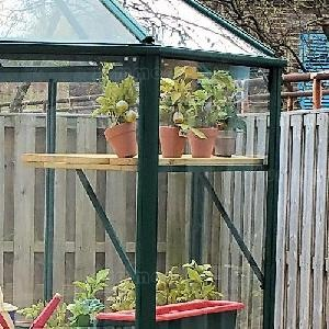 GREENHOUSES xx - Timber slatted high level shelving
