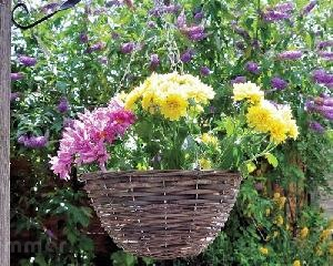 LOG CABINS - Hanging baskets and planters