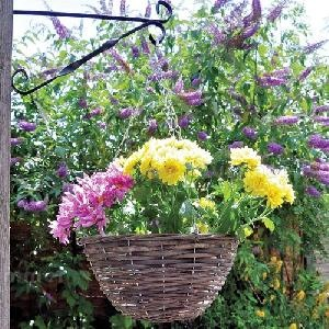 GAZEBOS - Hanging baskets and planters